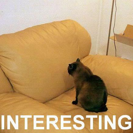"Cat says to couch, ""Interesting."""