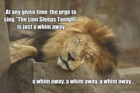 "At any given time, the urge to sing ""The Lion Sleeps Tonight,"" is just a whim away. A whim away, a whim away, a whim away..."