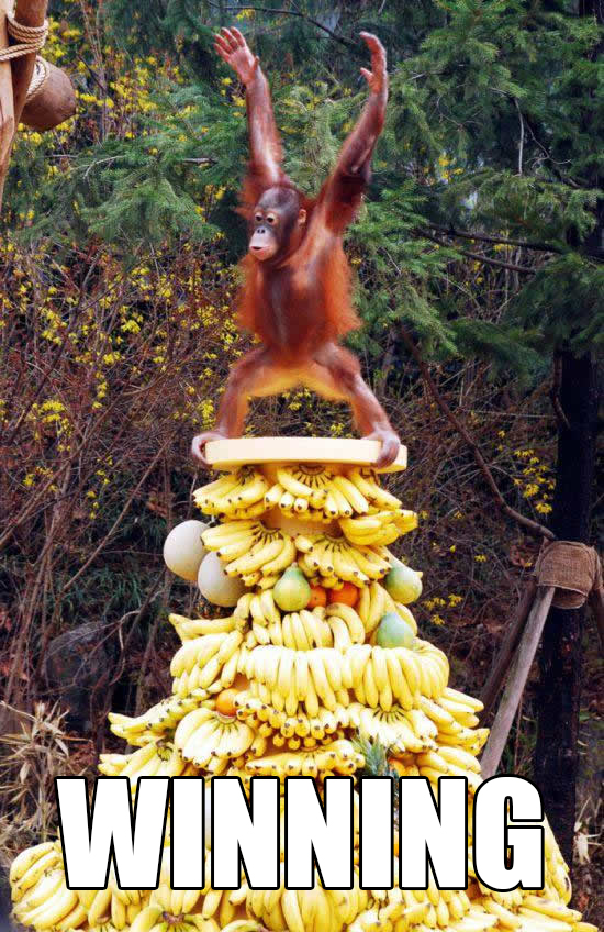 Orangutan sits on enormous pile of bananas and puts his hands in the air. Winning.