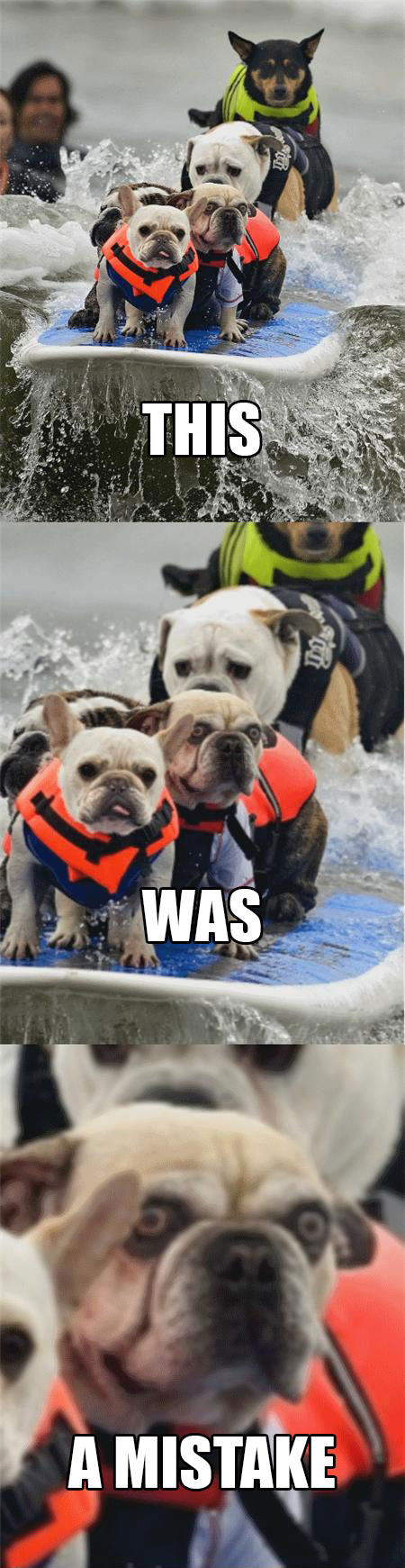 "Surfing dog says, ""This. Was. A mistake!"""