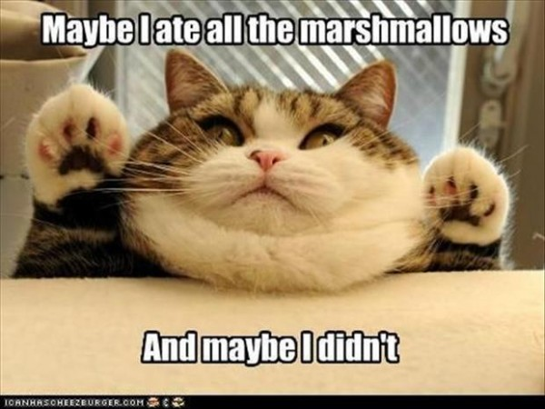 "Fat cat says, ""Maybe I ate all the marshmallows, and maybe I didn't."""