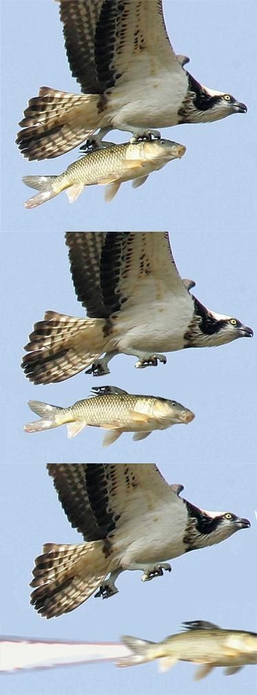 Bird shoots a fish missile. Nothing else to see here.