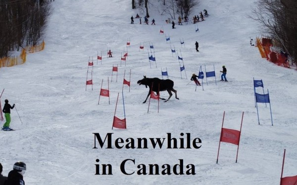 Moose strolls across ski slope: MEANWHILE IN CANADA.